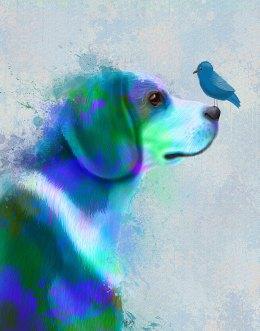Beagle Blue Splash