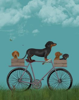 Dachshunds on Bicycle