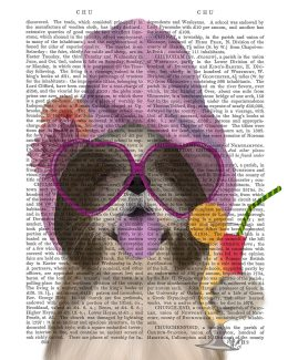 Shih Tzu with Cocktail