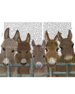 Donkey Herd at Fence 1