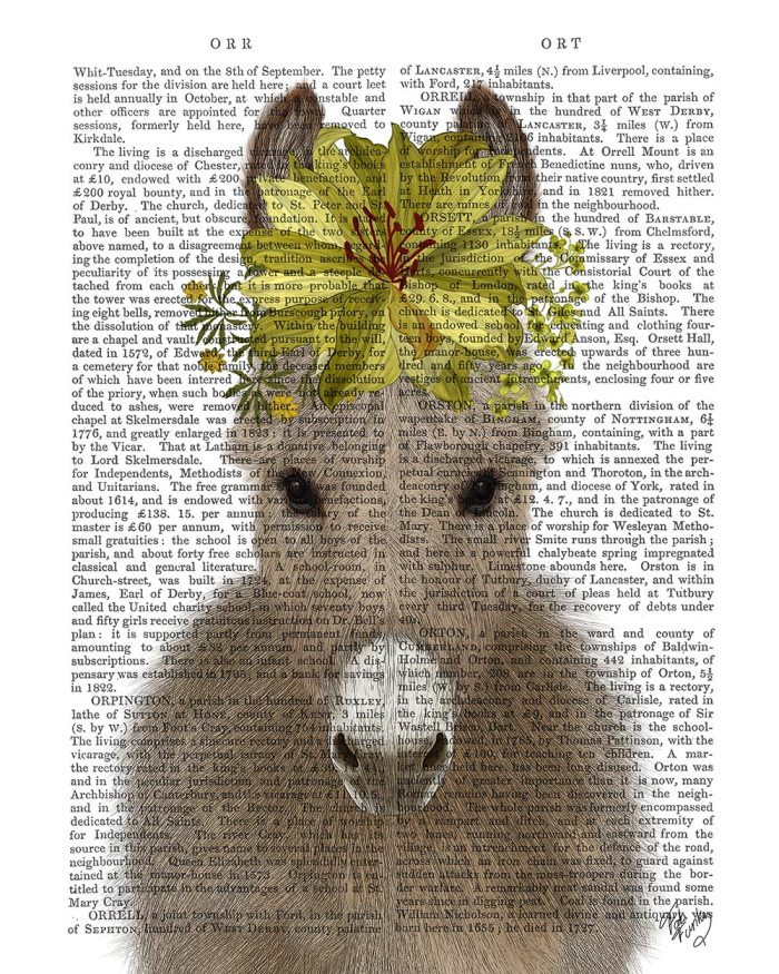 Donkey Sunflower