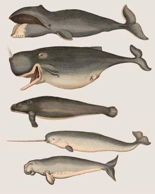 Five Vintage Whales