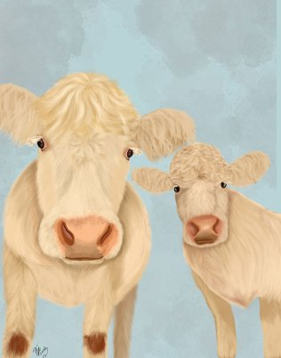 Cow Duo