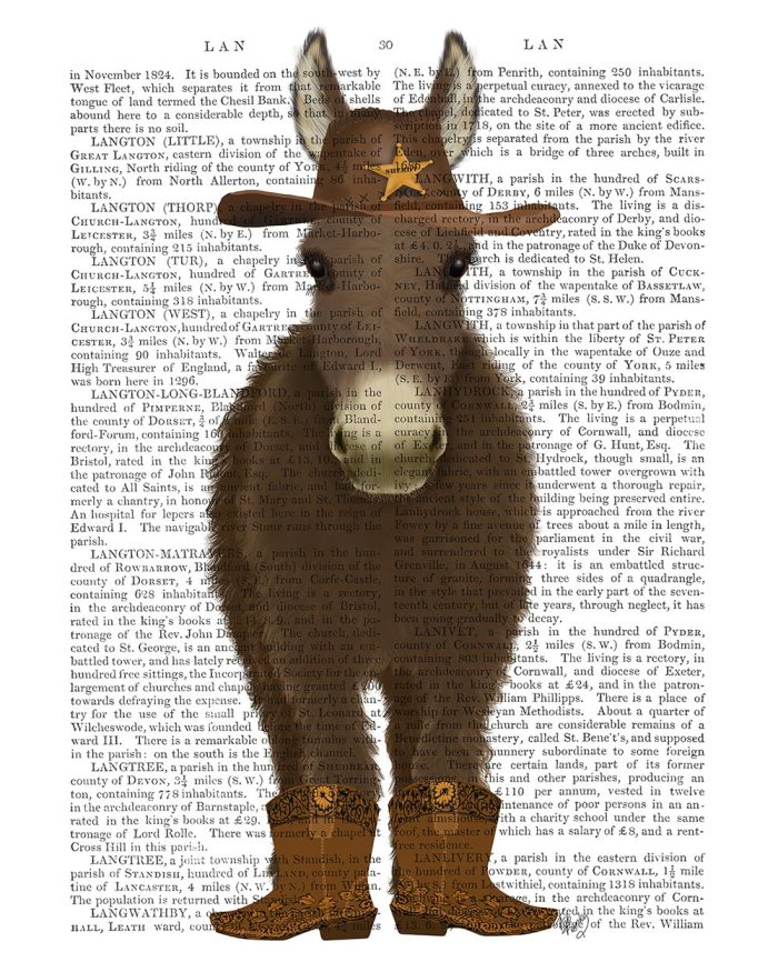 Donkey Cowboy