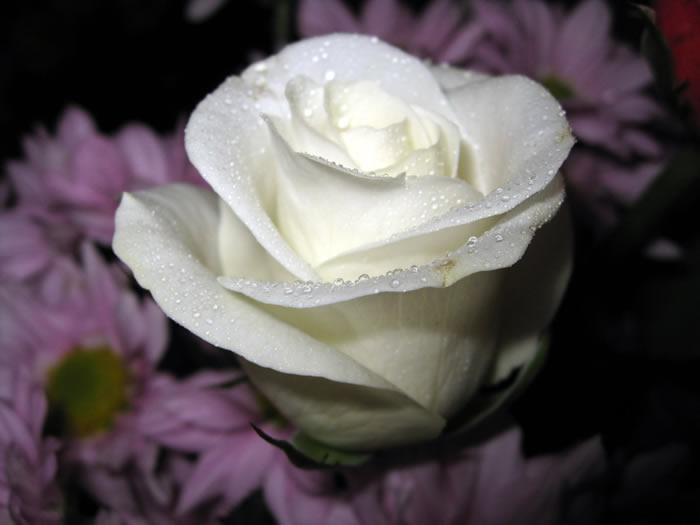 """""""https://i2.wp.com/www.fabiovisentin.com/photography/photo/12/roses-wallpaper-roses-bouquets4473_high.jpg"""" grafik dosyası hatalı olduğu için gösterilemiyor."""