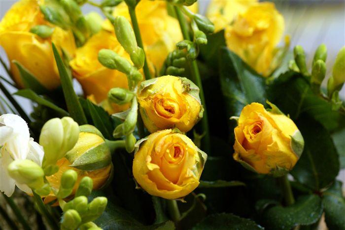 """""""https://i2.wp.com/www.fabiovisentin.com/photography/photo/12/yellow-roses-bouquet-00884_high.jpg"""" grafik dosyası hatalı olduğu için gösterilemiyor."""
