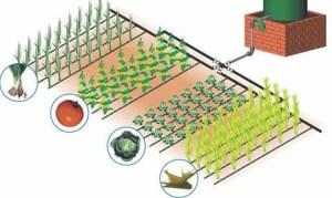 Schema sistem de irigare prin picurare
