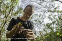 Stéphane Garnier libère un oiseau piégé
