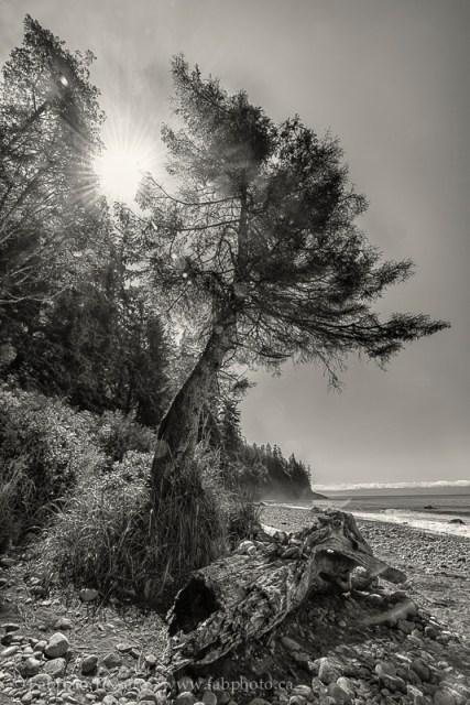Juan de Fuca Trail, Mystic Beach, Vancouver Island