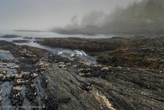 Port Renfrew,Vancouver Island,Botany Bay,