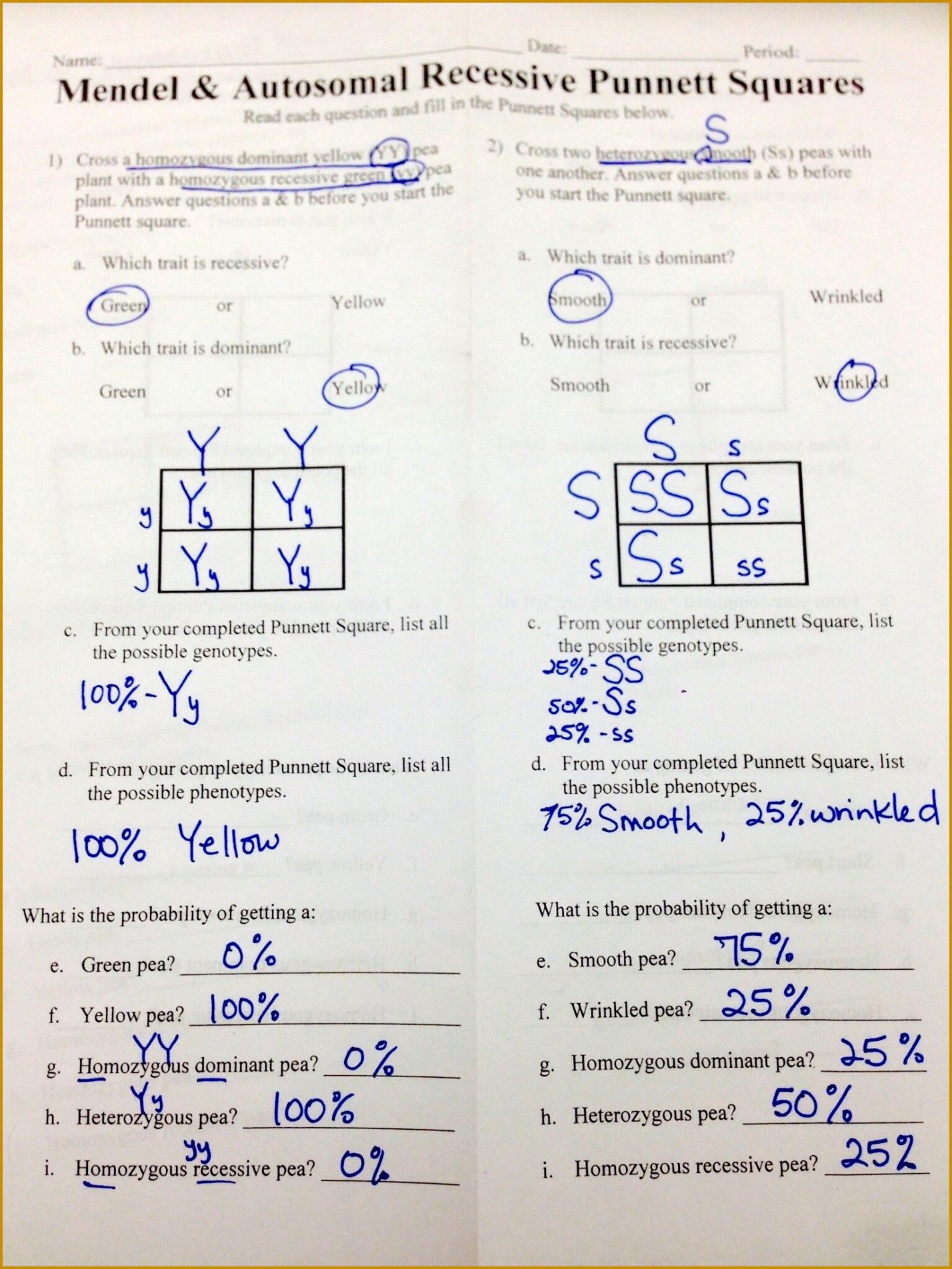7 13 1 Rna Worksheet Answers