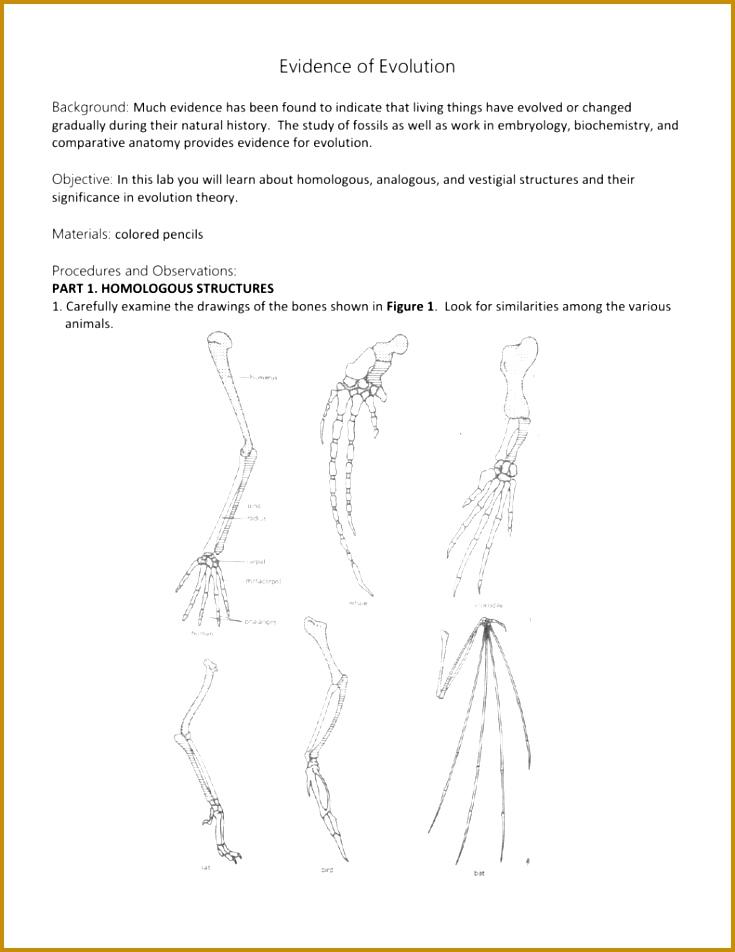 System Answers Endocrine Worksheet