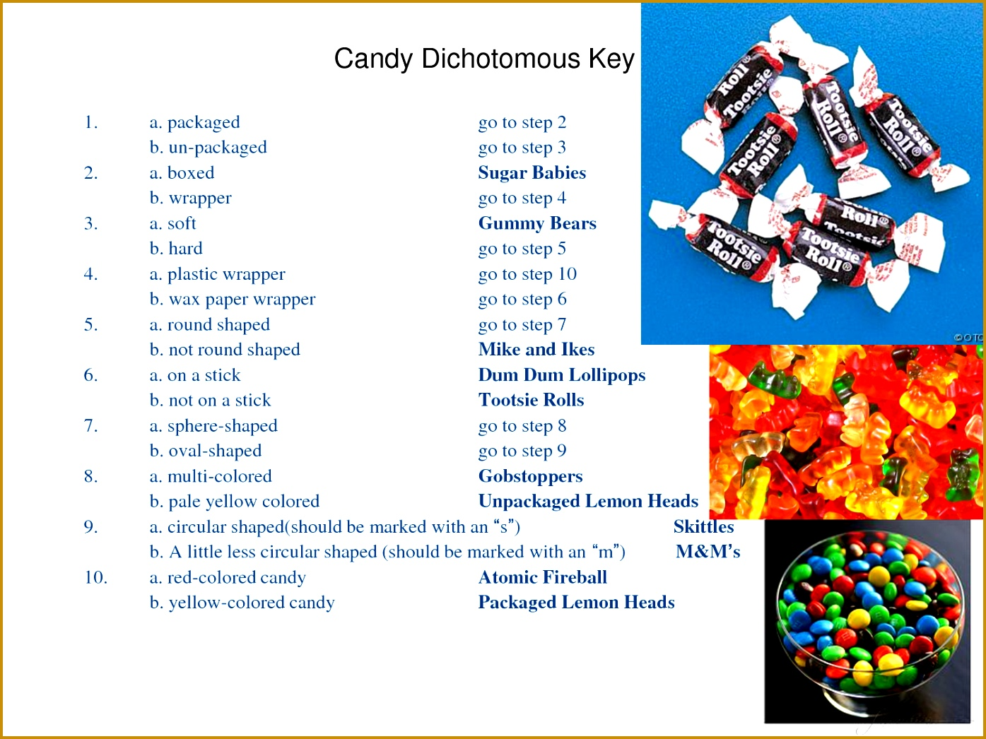 3 Dichotomous Key Worksheet
