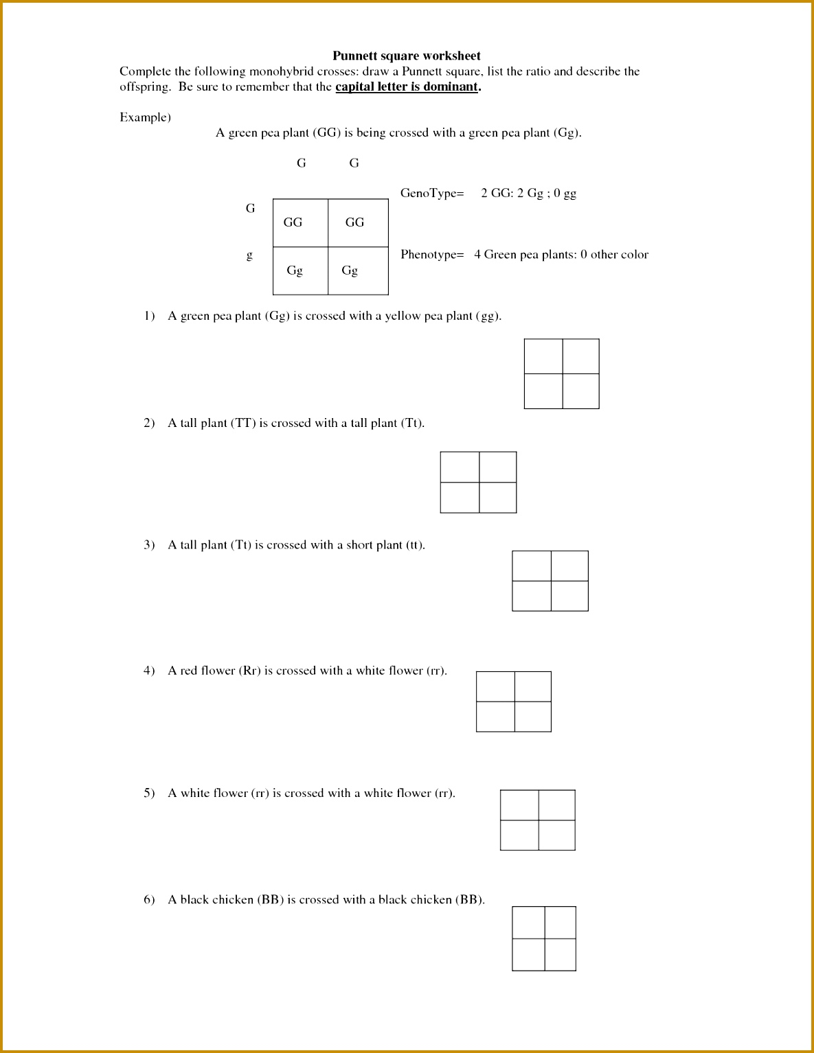 5 Dihybrid Cross Worksheet Answers