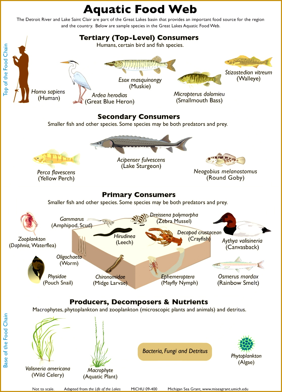5 Food Chain Worksheet