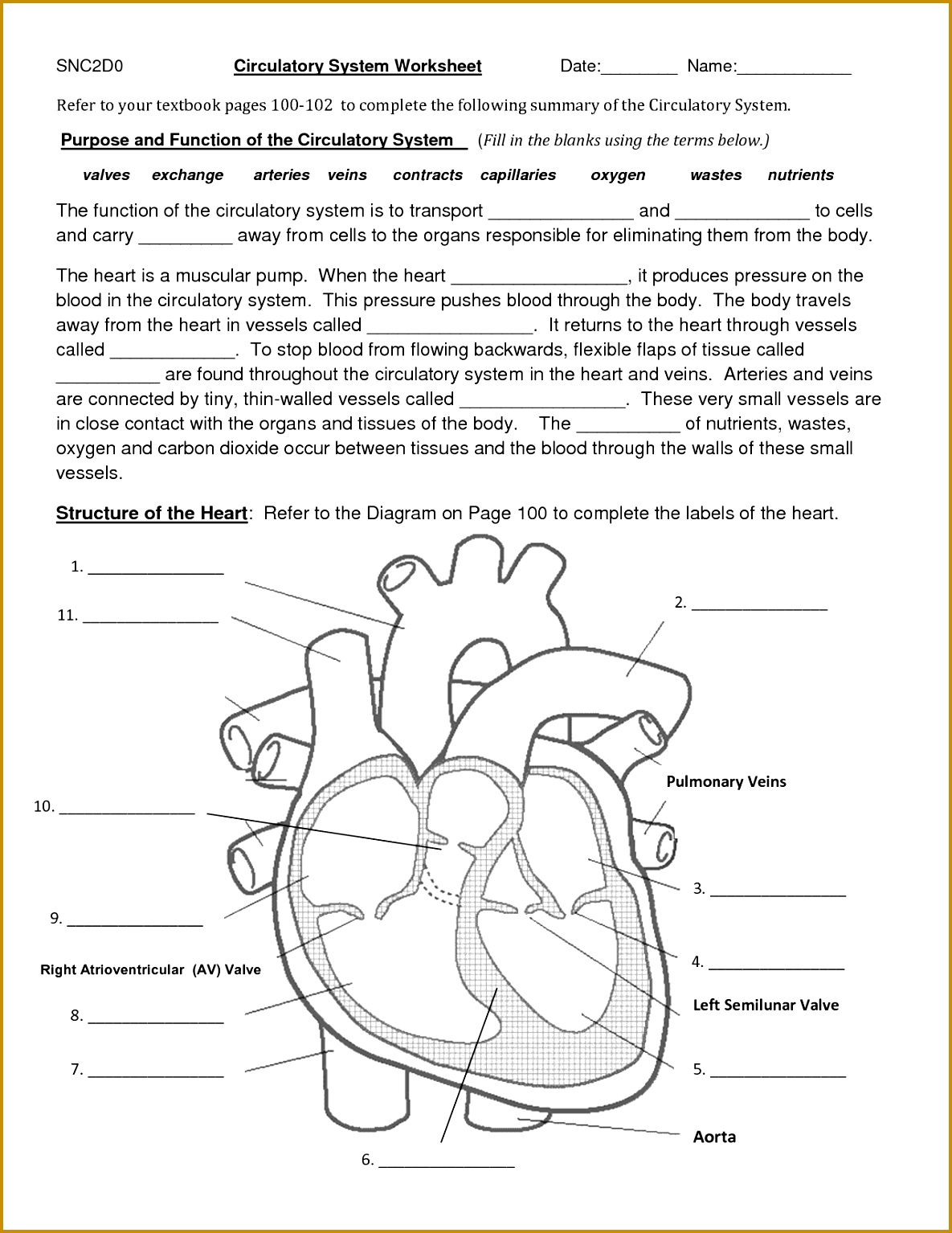 3 Nervous System Worksheet