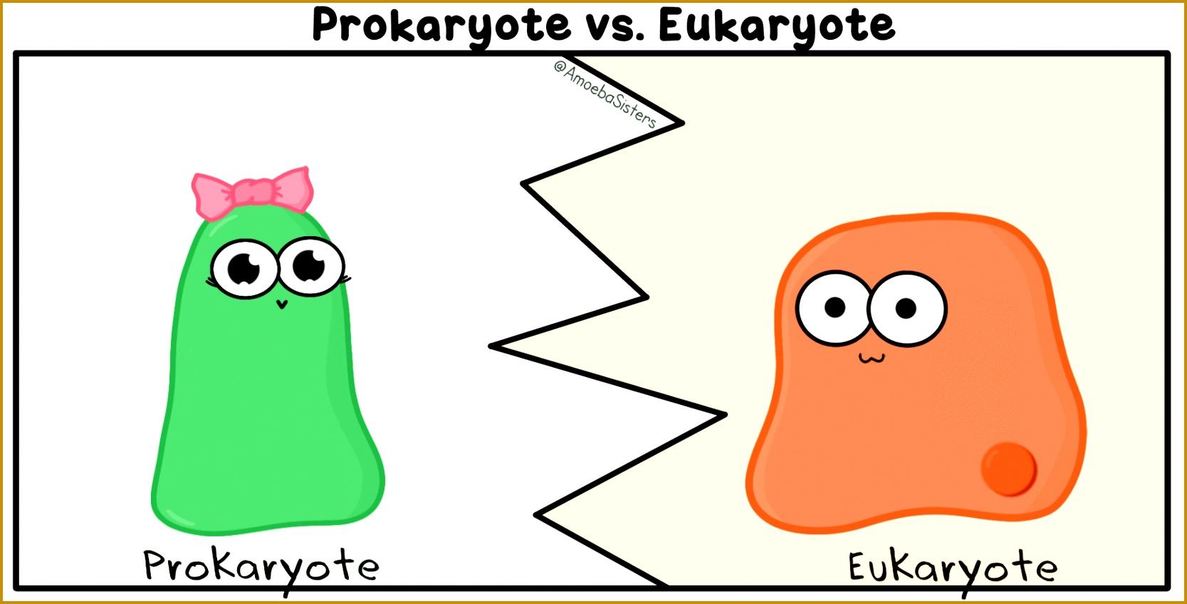 3 Prokaryote Vs Eukaryote Worksheet