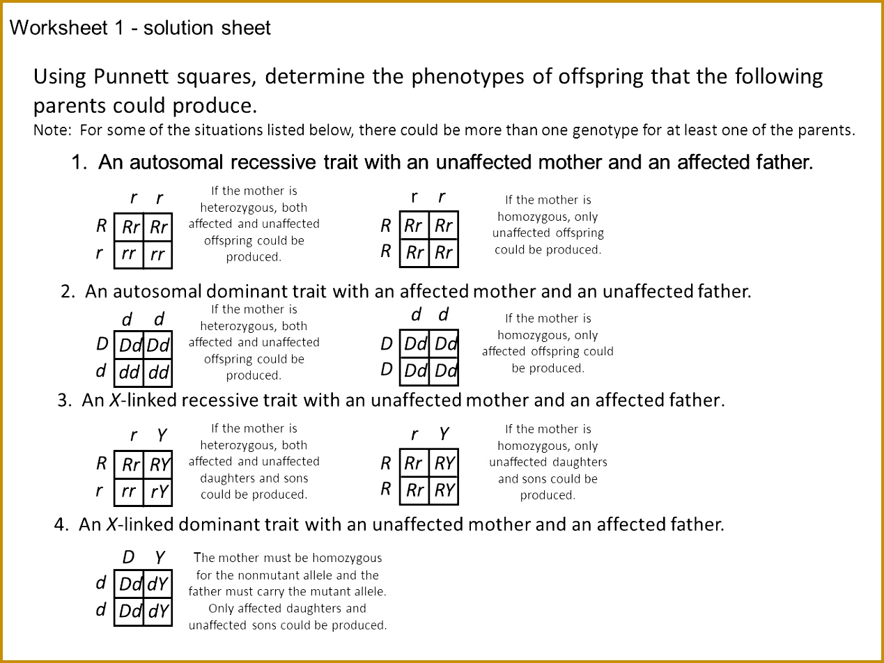 4 Punnett Square Practice Worksheet