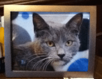 Wags-and-Whiskers-Pet-Rescue-Mardi-Gras-Sports-Bar-Cat