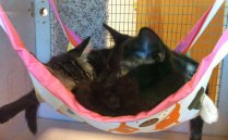 Fab-Finds-Featured-Story-flagler-humane-society-cat-hammock