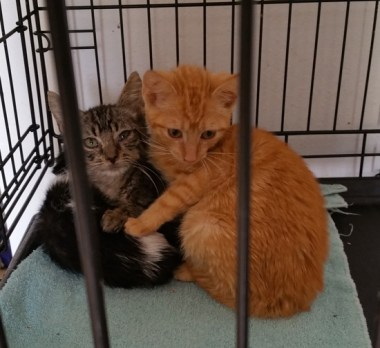 fab-finds-flagler-cats-texas-cats