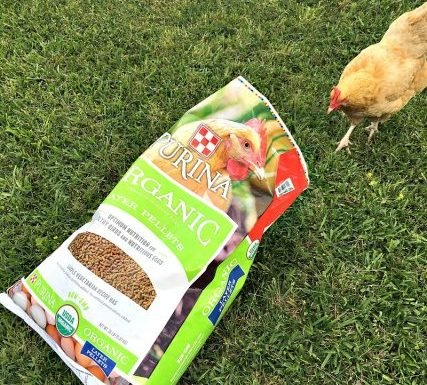 Purina® Organic Layer Poultry Feed