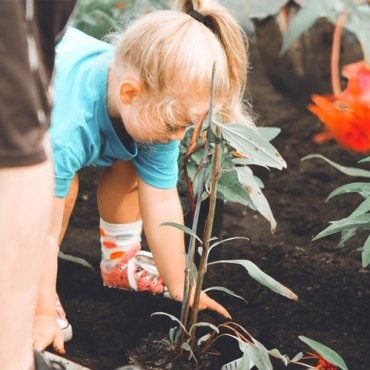 Ideas on How to Make a Garden Eco-Friendly and Safe