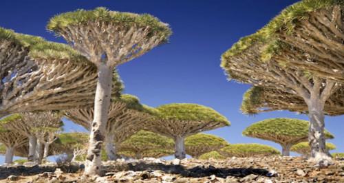 L'arcipelago di Socotra nell'Oceano Indiano