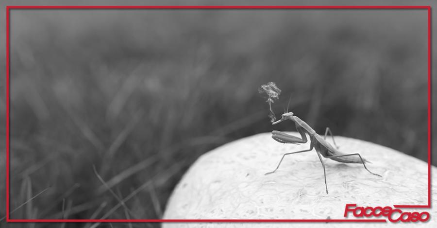 Pronti a mangiare gli insetti? Via libera dall'UE!
