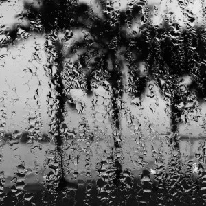 Coconut Trees, wet window pane, condensation, Kochi, Kochin, South India, India, Indian Cooking, Faces Places and Plates Blog, Karen Anderson, Pauli-Ann Carriere