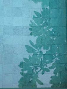 Leaves form shadows against the blue tiled plunge pool.