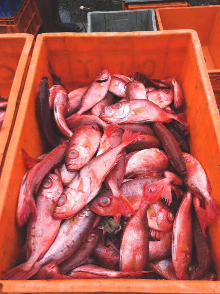 Red fish sit in an orange crate