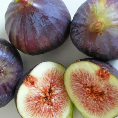 Image of Ficus carica 'Fig Black Genoa'