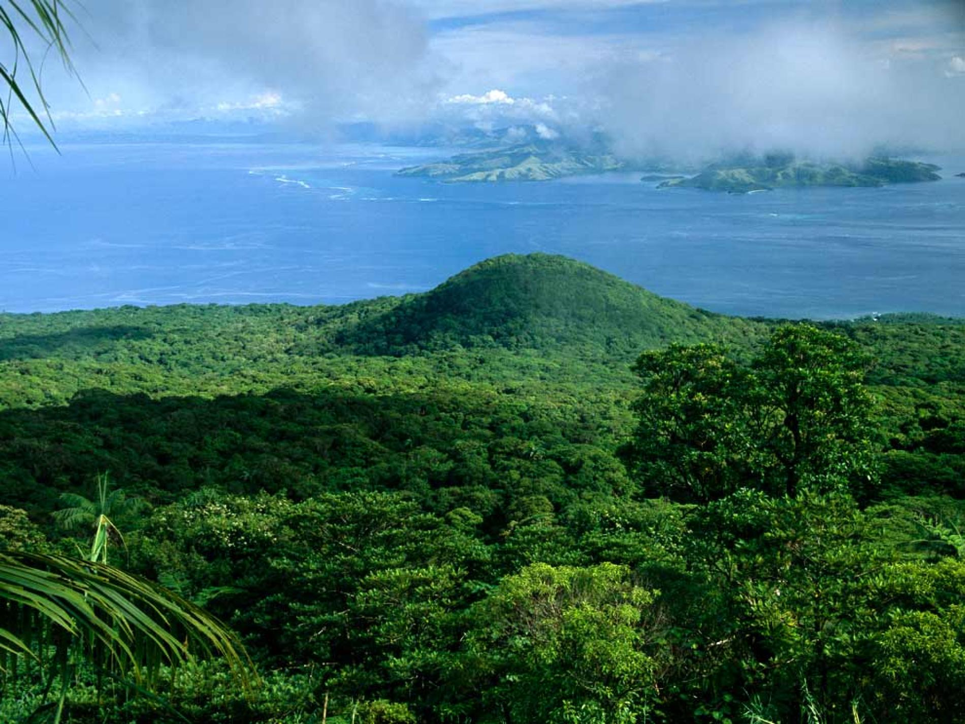 42 Astonishing Facts About Rainforests