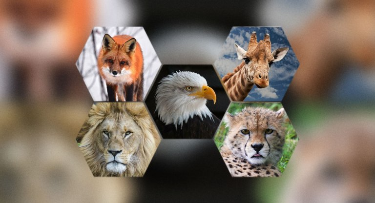 Amazing-interesting-facts-about-animals