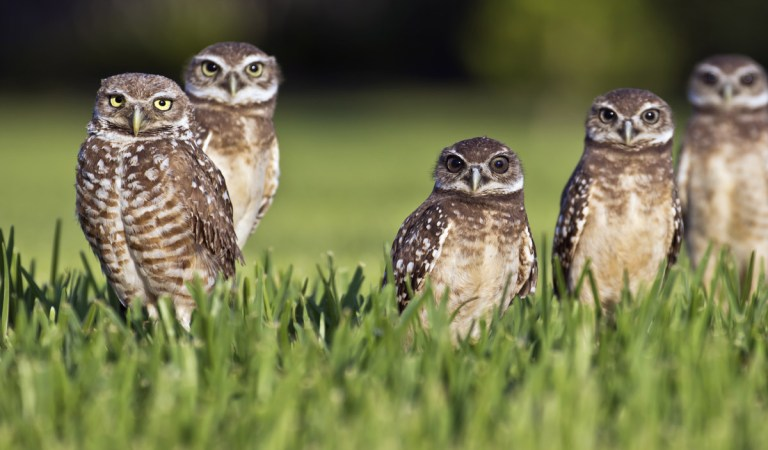 20 Weird and Funny names of Animal groups