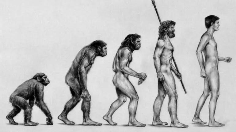 Darwin-Evolution-Interieur