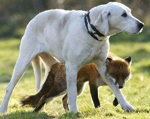 Unlikely Animal Friends Animal Pictures And Facts