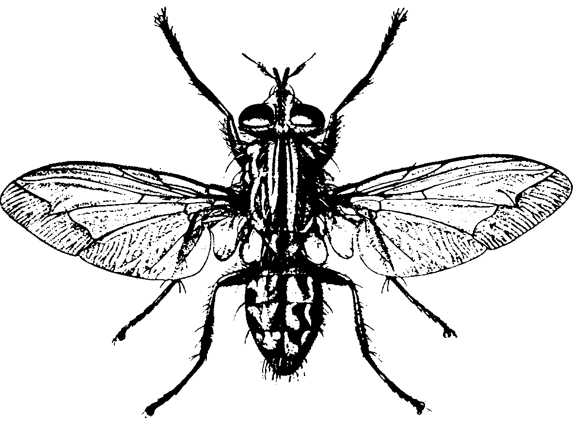 tags: #firefly body labeled#insect parts diagram#anatomy body parts labeled# firefly bug life cycle#firefly body labeled part of#firefly life cycle# firefly