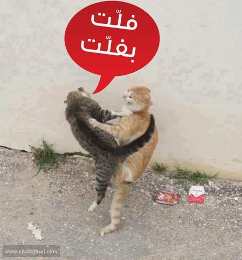 صور مضحكة روعه بتعليقات مضحكة نكت اساحبي للفيس بوك Asa7be