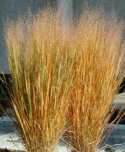northwind fall color