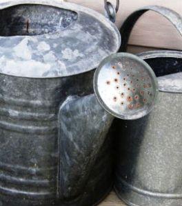wateringcaninstructions