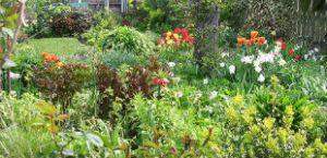 perennial design gardening kerry mendez