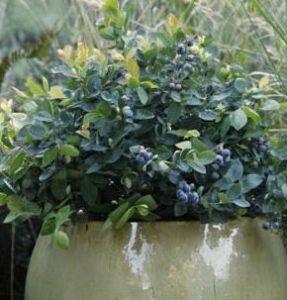 brazelberry jelly bean latham ny