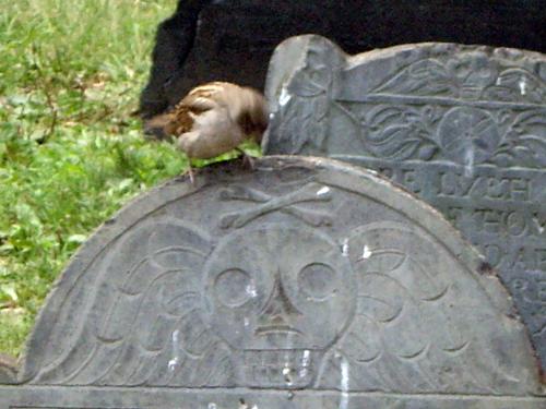 Spooky Sparrow - Granary Burying Ground - Park Street, Boston MA