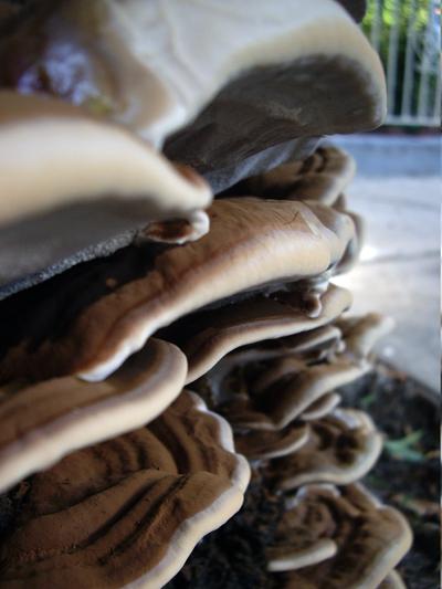 Flatbush Fungi