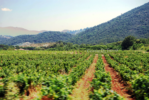 While driving 140 KMPH towards St. Tropez. Chateau Thouar - Vignoble Biologique - © Frank H. Jump