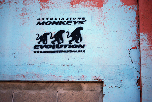 Monkeys Evolution dot org - Torino, Italy - © Frank H. Jump