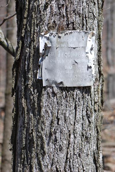 Pocono Tree Fade