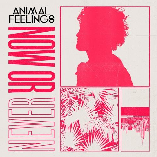 Animal Feelings - Now or Never (artwork faeton music)